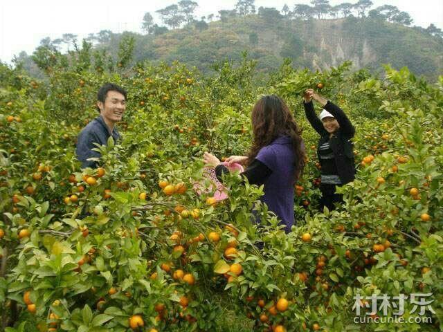 乡村产业由卖产品转向卖风景——龙桂乡彭家坝乡村休闲驴游探讨